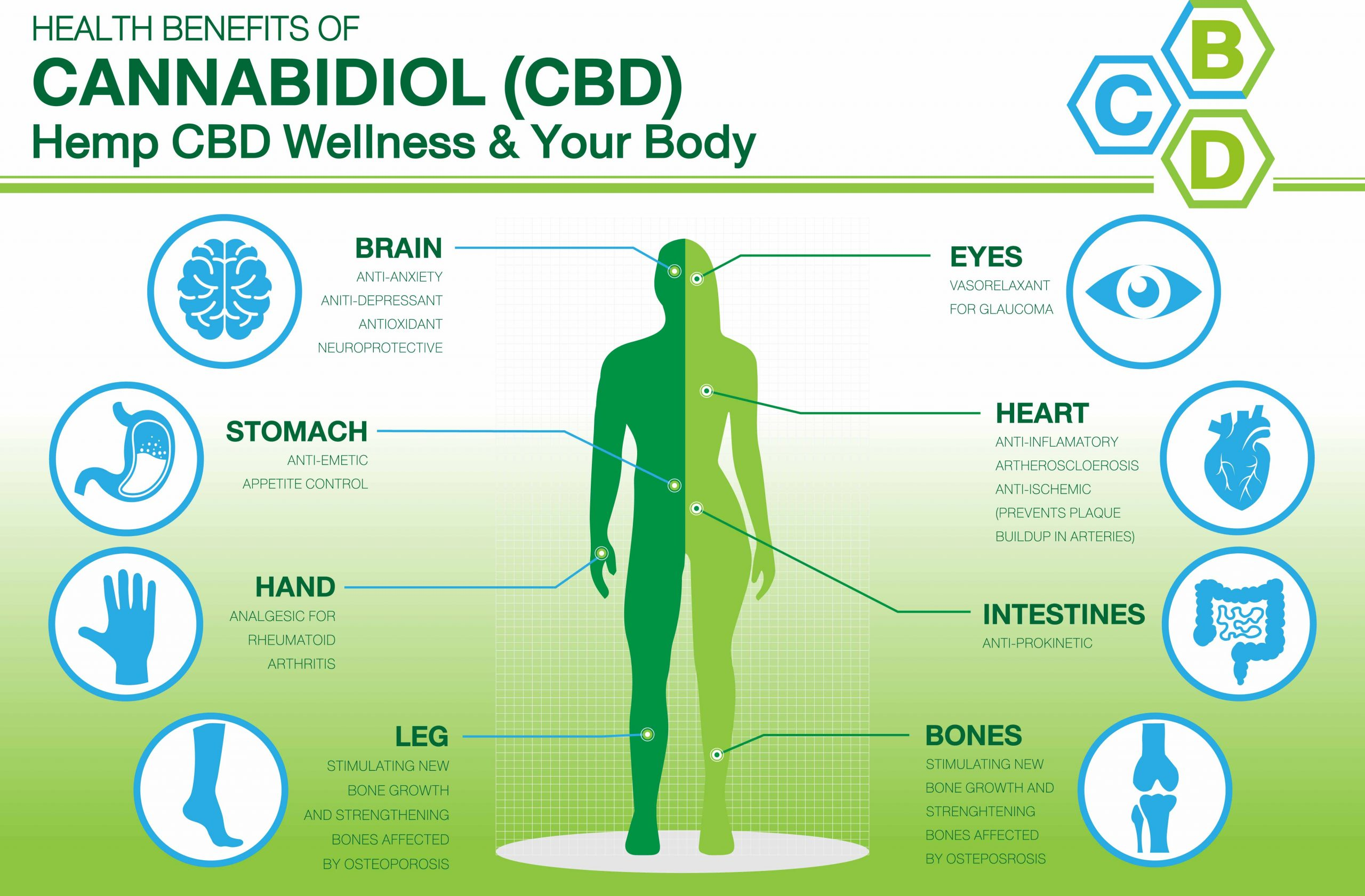 How CBD Effects the body