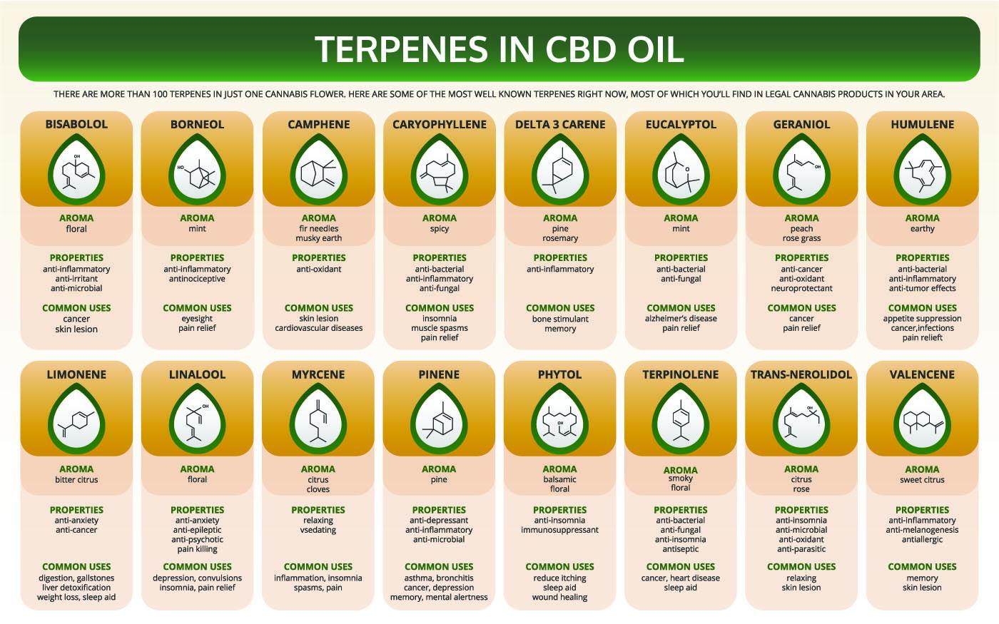 Terpenes in CBD Oil infographic